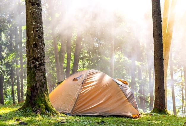 Het kamperen tent in groen bos in de lente