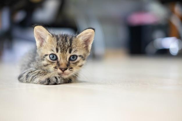 Het katje gaat op de vloer liggen en kijkt recht
