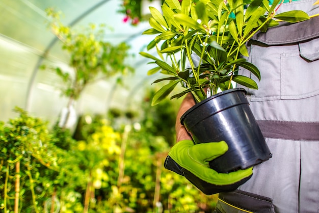 Het kiezen van juiste tuinbloemen