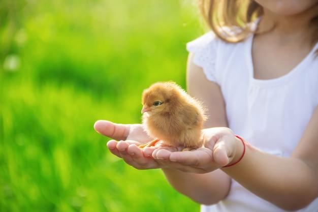 Het kind houdt een kip in zijn handen. selectieve aandacht.
