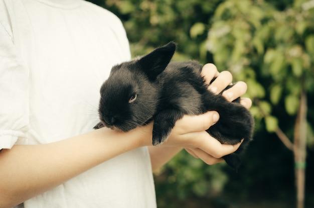 Het kind houdt een zwart konijntje in de handen van groen. concept - boerderijdieren, jonge huisdieren.