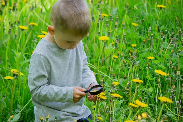 Het kind onderzoekt de bloem in een vergrootglas. natuur. selectieve focus