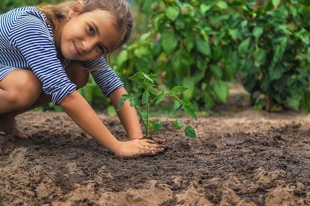 Het kind plant een plant in de tuin. selectieve aandacht. natuur.