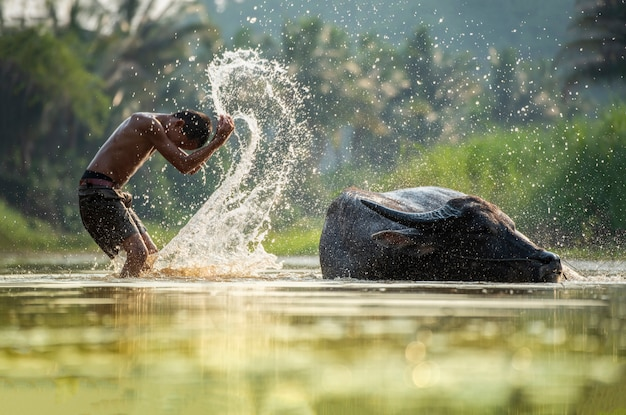 Het kind van azië op rivierbuffel