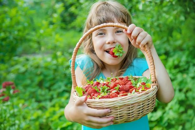 Het kind verzamelt aardbeien in de tuin. selectieve aandacht.