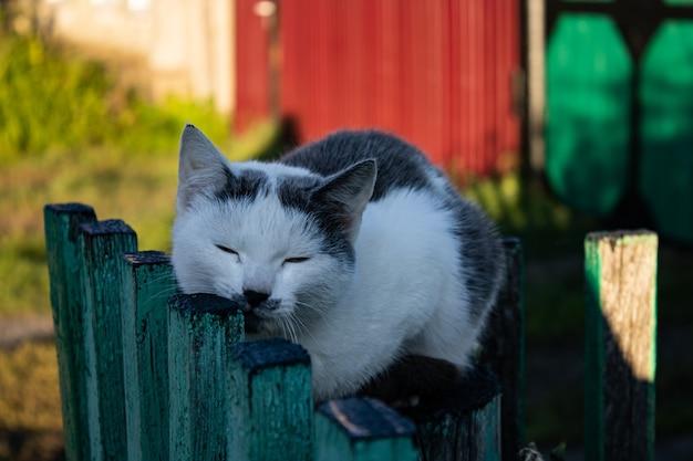 Het kitten zit op het hek en krabt zijn snuit op houten stokjes