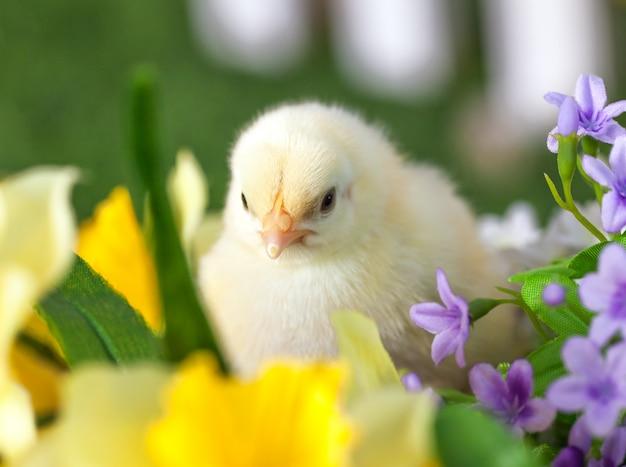 Het kleine kuiken zit in bloemen