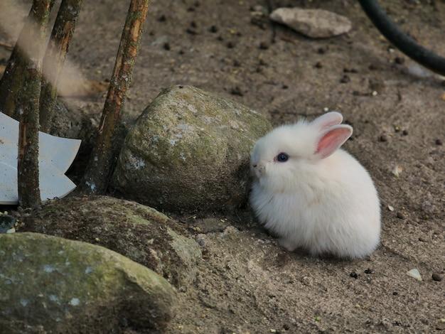 Het kleine witte konijn, gehurkt bij de rotsen