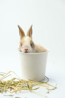 Het konijn zat in een witte kartonnen beker met een rietje aan de zijkant.