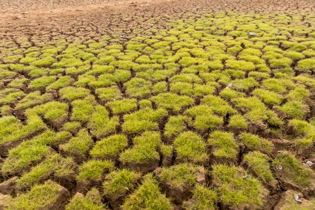 Het land met droge grond en gras bedekt de opwarming van de aarde