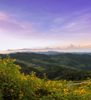 Het landschap van de bergzonsopgang met mexicaanse zonnebloem in meahongson, thailand
