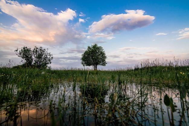 Het landschap van de de zomerochtend met een eenzame boom op een gebied met groen gras bij dageraad en een vijver