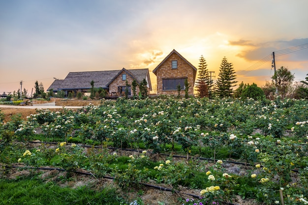 Het landschap van het bloeien nam graden met mooi huis op onder berg toe