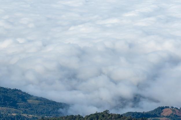 Het landschap van hoge berg mist bedekt bos.