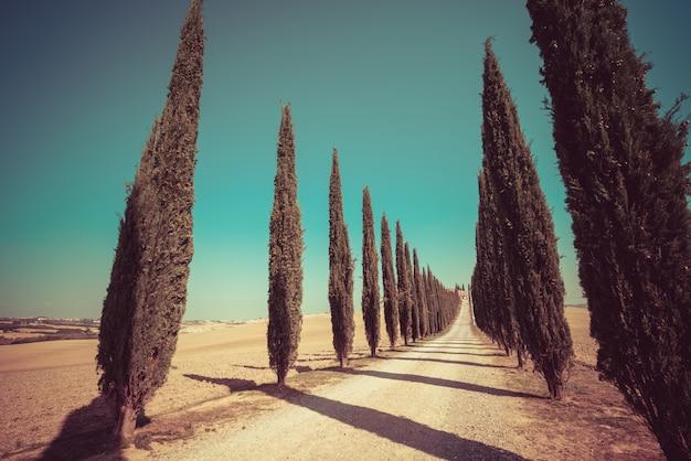 Het landschap van toscanië van de weg van cipresbomen in italië.