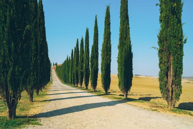 Het landschap van toscanië van de weg van cipressenbomen in italië.