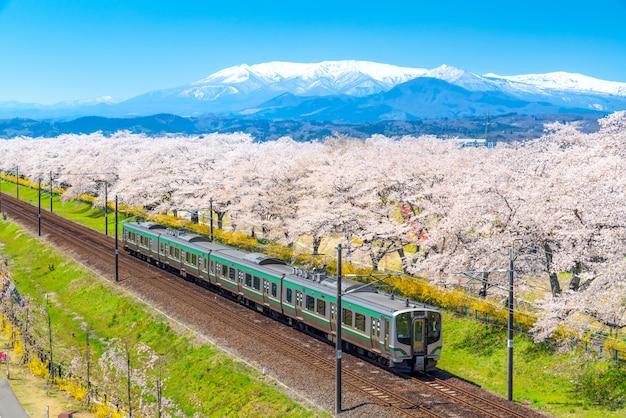 Het landschaps toneelmening van japan van tohoku-trein met volledige bloei van sakura en kersenbloesem.