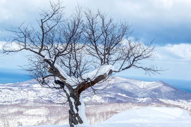 Het landschapsmening van de de wintersneeuw in otaru-stad, hokkaido, japan