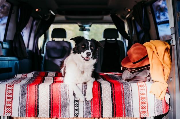 Het leuke border collie-hond ontspannen in een bestelwagen. reizen concept