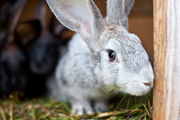 Het leuke grijze en bruine konijn in een kooi, sluit omhoog