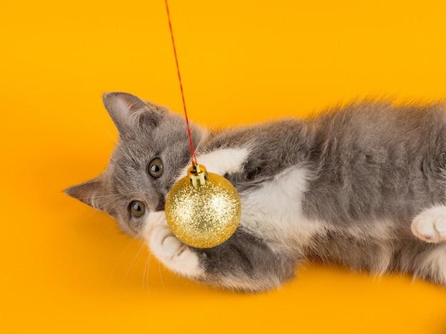 Het leuke grijze katje grappig spelen en pret met een kerstmisstuk speelgoed op een geel.