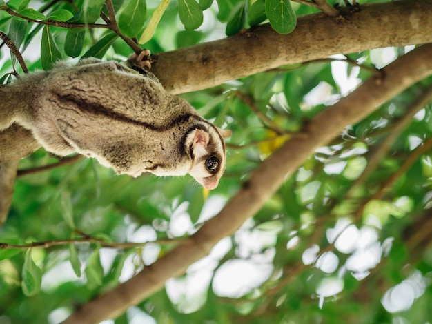 Het leuke suikerzweefvliegtuig spelen op boomtak.