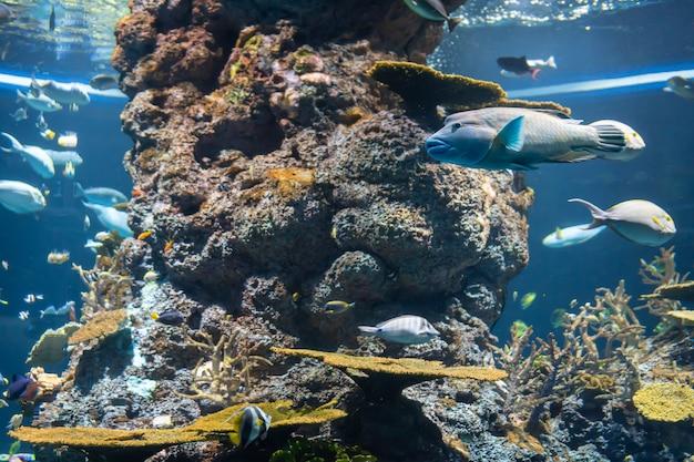 Het leven in zee. koraal en zeevissen in een onderwateromgeving