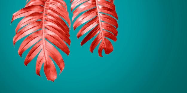 Het leven koraal philodendron verlaat op de blauwe achtergrond de minimale zomer