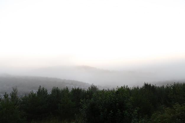 Het magische gebladerte van de ochtendmist op een mooi landschap van het plattelandslandschap