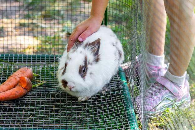 Het meisje aait een klein wit pluizig konijn_