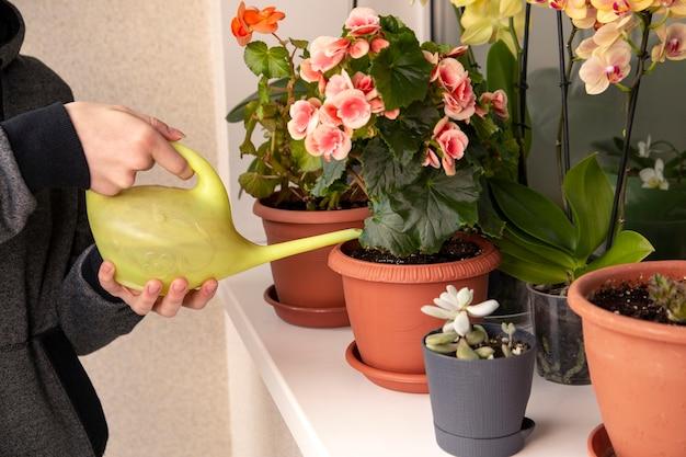 Het meisje de bloeiende planten op de vensterbank water geven huis planten groene huis levensstijl