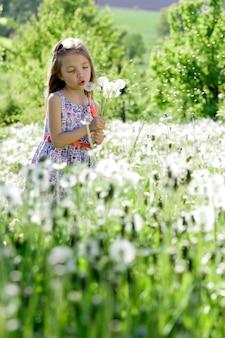 Het meisje geniet bloem van paardebloem op groen gebied of weide in de de lente zonnige dag.