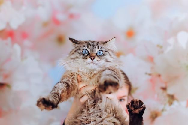 Het meisje houdt de stamboomkat voor zich en de kat kijkt miauwend in de cameralens