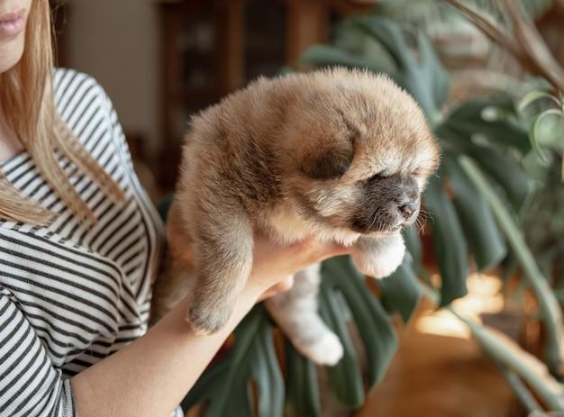 Het meisje houdt een kleine pluizige pasgeboren puppy in haar armen