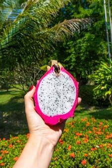 Het meisje houdt in haar hand een rijp gesneden drakenfruit op een achtergrond van een tropische tuin. first-person view. vitaminen, fruit, gezond voedsel