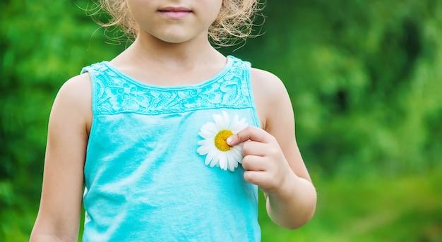 Het meisje houdt kamillebloemen in haar handen. selectieve aandacht.