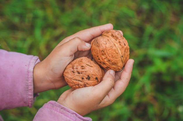 Het meisje houdt walnoten in zijn handen.