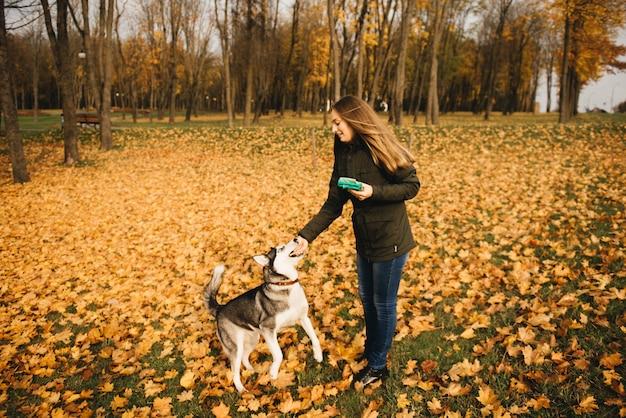 Het meisje in de gele bladeren van de herfst park speelt en voedt de husky hond