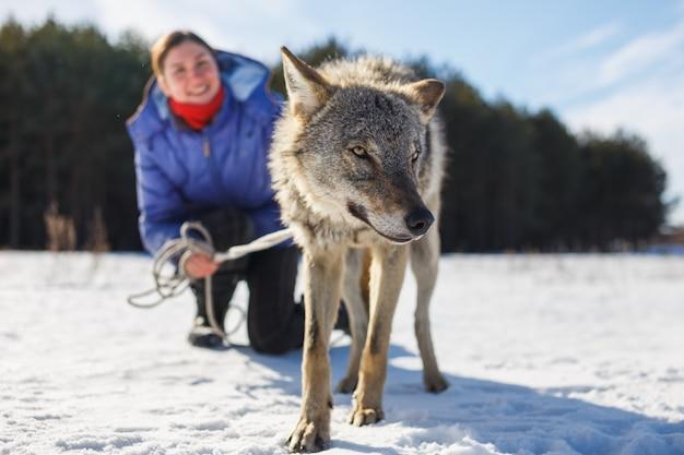 Het meisje is bezig met het trainen van een grijze wolf in een besneeuwd en zonnig veld.
