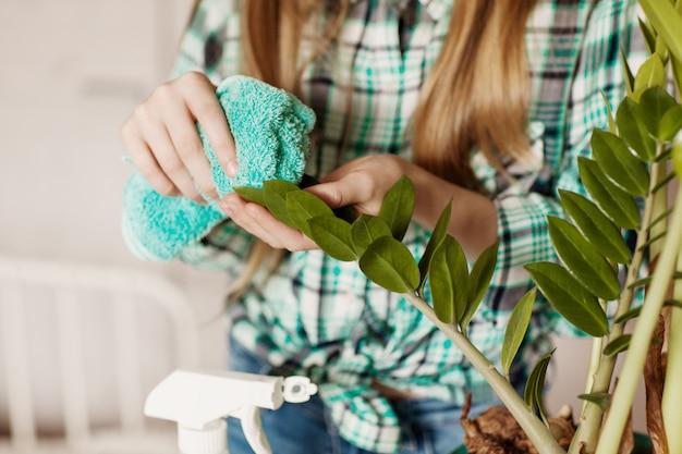 Het meisje veegt het stof van de groene bladeren van de kamerplant. zorg voor kamerplanten.