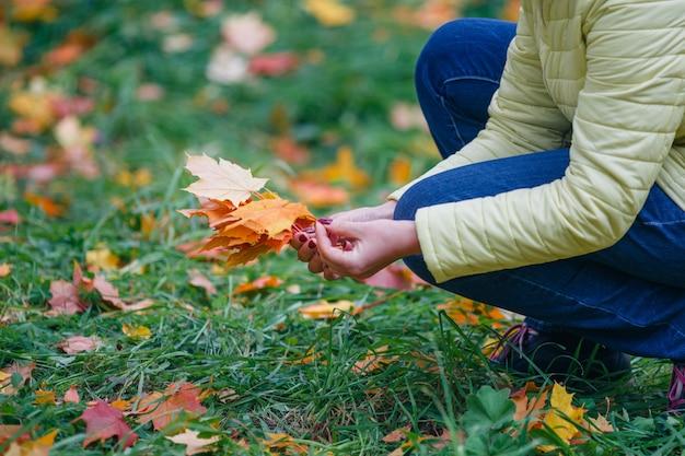 Het meisje verzamelt de bladeren van de dalingsesdoorn in park