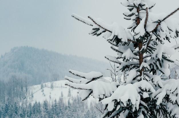 Het met sneeuw bedekte nette landschap van de boomwinter