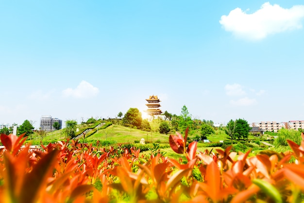 Het mid-lake paviljoen en een vijver met lotussen. gelegen in chengde mountain resort. het is een groot complex van keizerlijke paleizen en tuinen gelegen in de stad chengde in hebei, china.