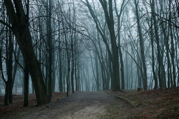 Het mistige donkere bos in de ochtend ziet er magisch uit