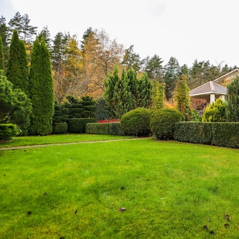 Het modelleren van een tuin met een groen gazon kleurrijke decoratieve struiken en gevormde taxus en buxus