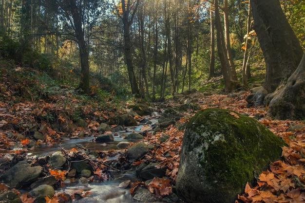 Het mooie gebied van de rivierberg van monchique, portugal