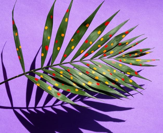 Het mooie geschilderde concept van varenbladeren met schaduwen