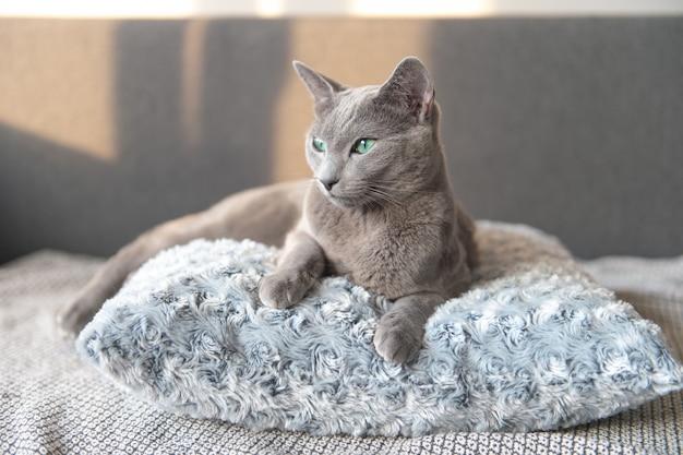 Het mooie katje ontspannen op hoofdkussen