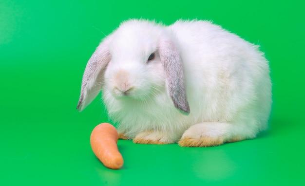 Het mooie konijn eet wortelen op een groene achtergrond