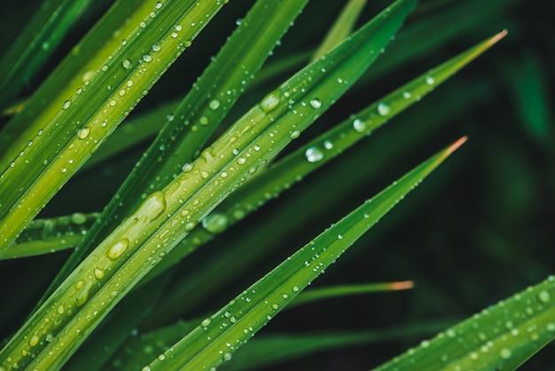 Het mooie levendige glanzende groene gras met dauw laat vallen close-up met copyspace. puur, aangenaam, mooi groen met regendruppels in zonlicht in macro. achtergrond van groene getextureerde planten in regenweer.